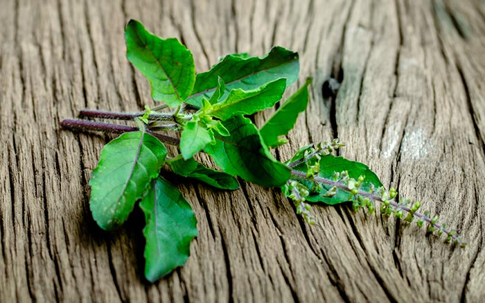 4. Tulsi Hair Oil For An Itchy Scalp