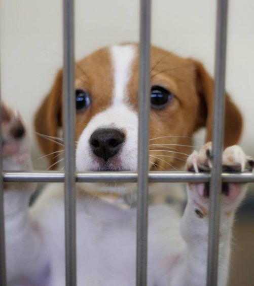 Do We Need Animal Testing?