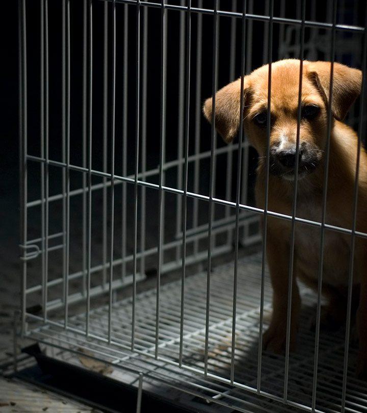 Do-We-Need-Animal-Testing