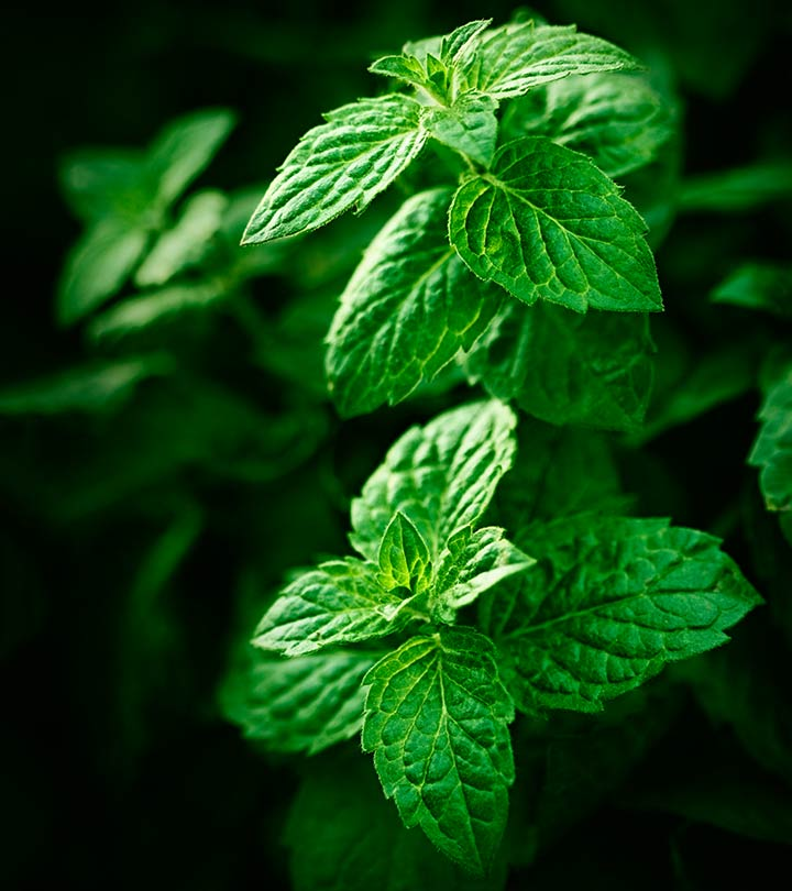 Can Mint Leaves Help Cure Acne Scars?