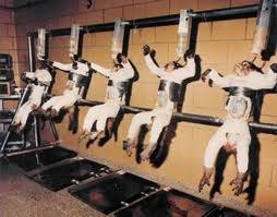 Animal testing procedures