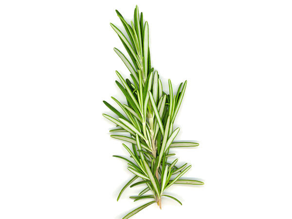 Rosemary-benefits-for-hair-300x199
