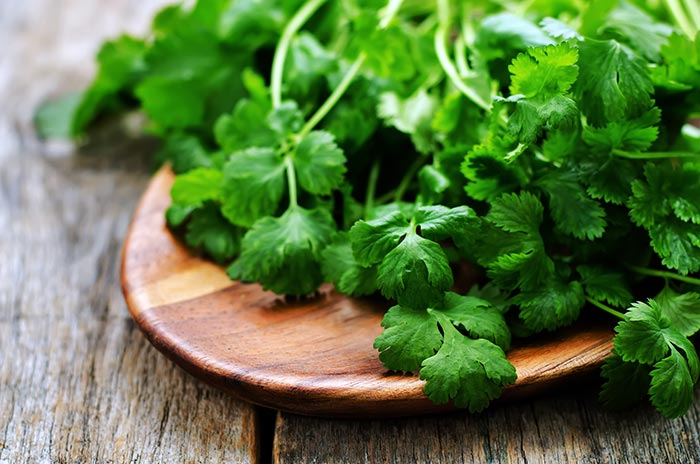 Coriander Lip Treatment To Get Pink Lips Naturally
