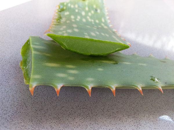 Aloe Vera gel herbal hair care