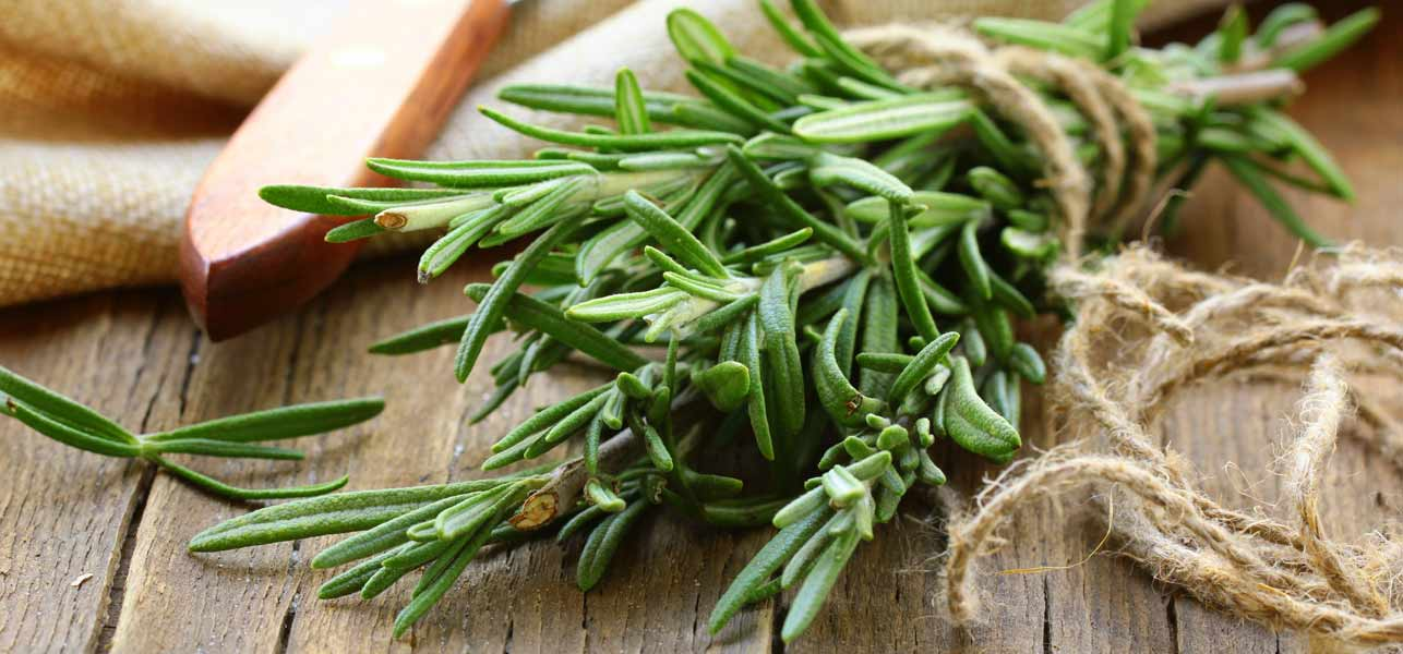 How-Does-Rosemary-Help-In-Hair-Growth