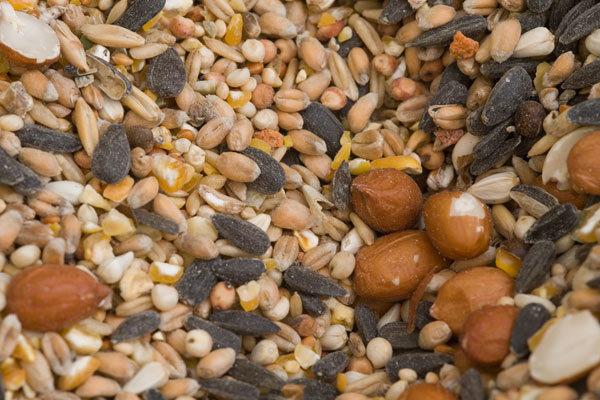 Fındık ve tohumlar