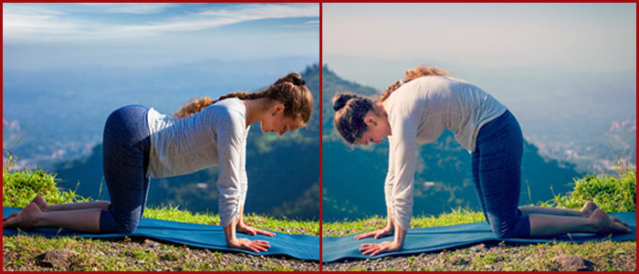 Marjariasana And Bitilasana To Cure Neck Pain - Yoga