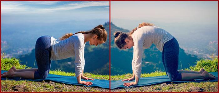 Marjariasana And Bitilasana To Cure Neck Pain - Yoga
