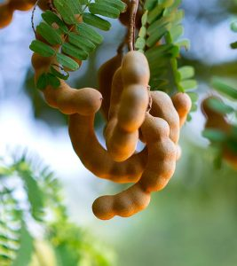 10 Effective Ways To Use Tamarind For Skin Care