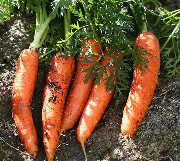 carrot beauty benefits