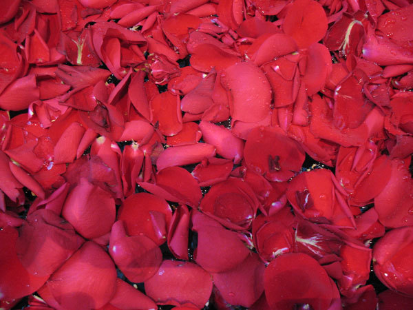 rose petals benefits