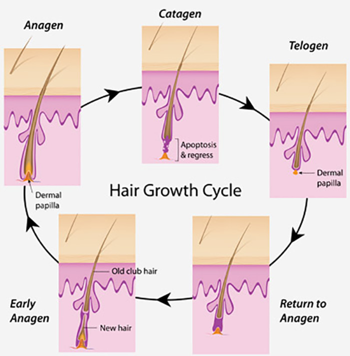 Science-Behind-Hair-Growth