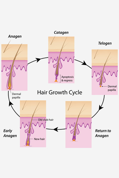 The Science Behind Hair Growth
