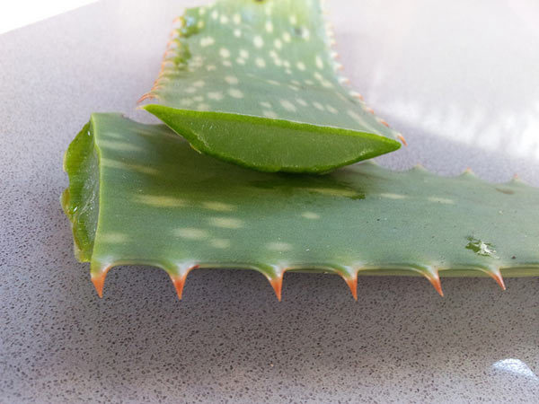 aloe vera gel for hair benefits