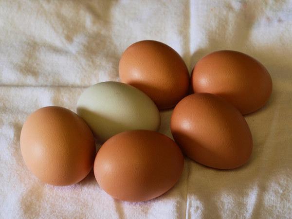 egg benefits for hair