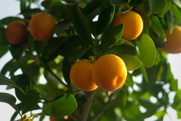 Best Fruits For Health - Oranges
