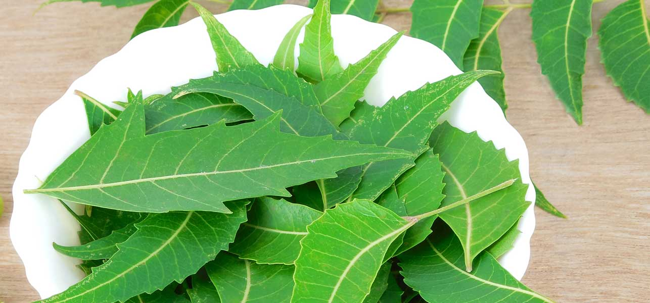 neem for mosquito