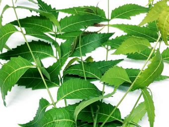 Can You Eat Neem Leaves What Are The Health Benefits