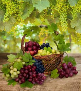 How Healthy Are Grapes What Research Says About Their Benefits And Side Effects
