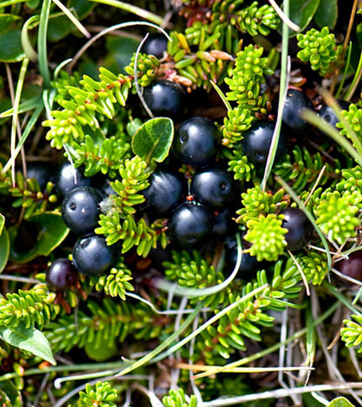 13-Amazing-Health-Benefits-Of-Crowberries