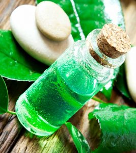 31 Amazing Benefits Of Tea Tree Oil For Skin, Hair, And Health