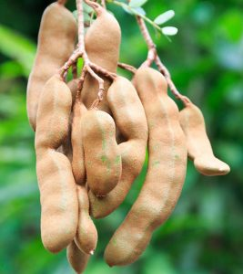 What Are The Top 7 Benefits Of Tamarind Fruit? Why Should You Eat It?