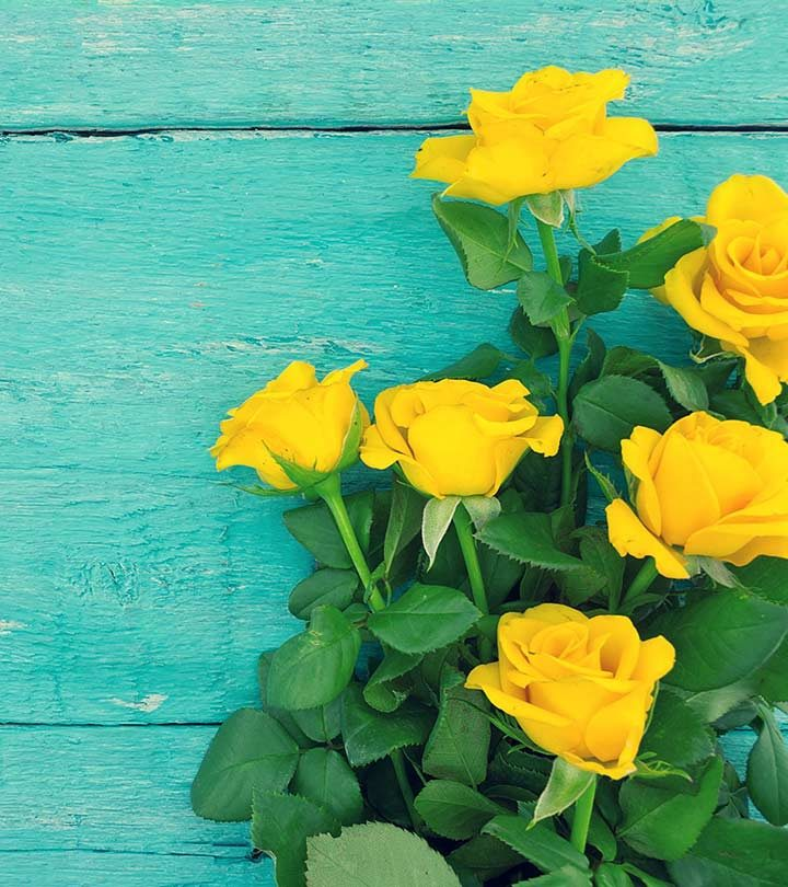 Top 10 Most Beautiful Yellow Roses