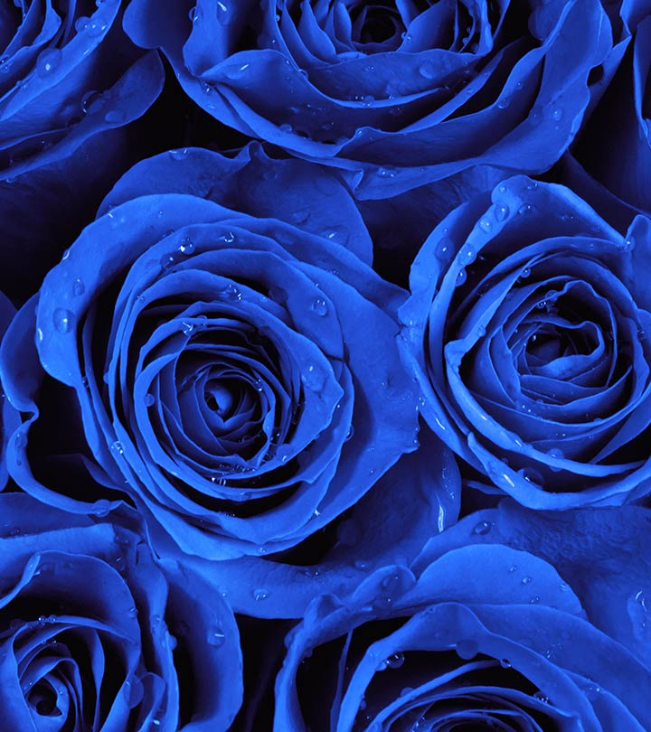 Top 10 most beautiful blue roses - Most beautiful dark wallpapers ...