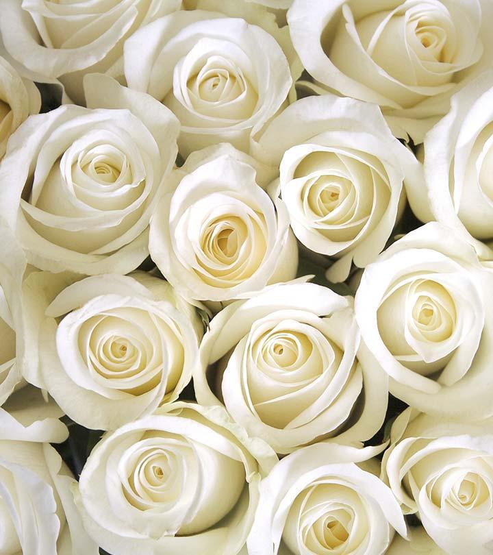 White Roses Background. Beautiful Fresh Stock Footage ...  |Beautiful White Rose Flowers
