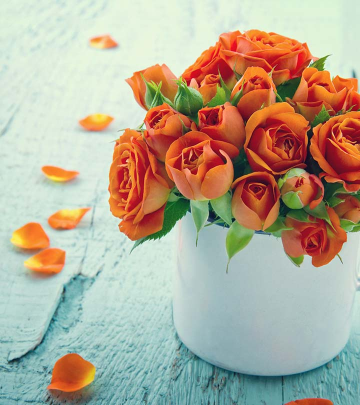 Top 10 Most Beautiful Orange Roses