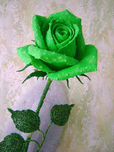 Artificially Dyed Rose