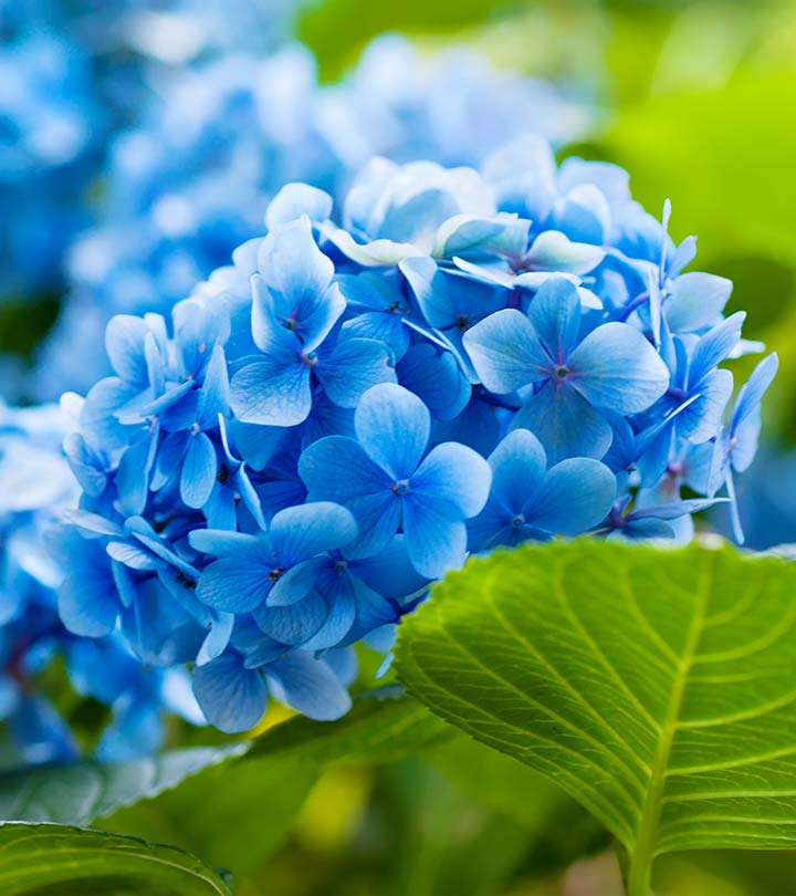25 most beautiful blue flowers mightylinksfo