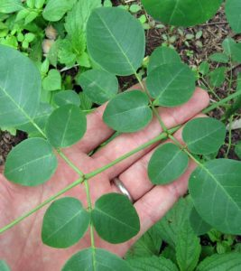 30 Amazing Benefits Of Moringa Plant (Sahijan) For Skin, Hair And Health