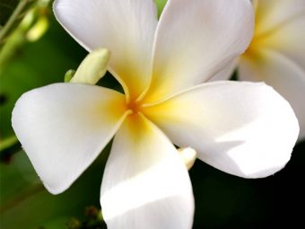 306_Top 25 Most Beautiful White Flowers-655909018