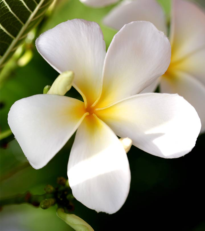 Top 25 most beautiful white flowers 306top 25 most beautiful white flowers 655909018 mightylinksfo