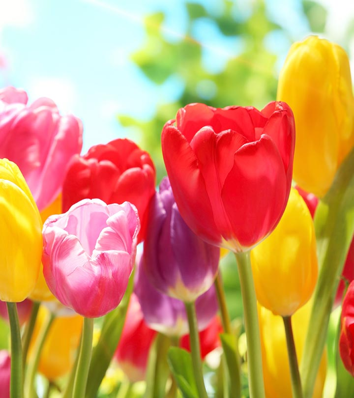 Pictures of the prettiest flowers in world