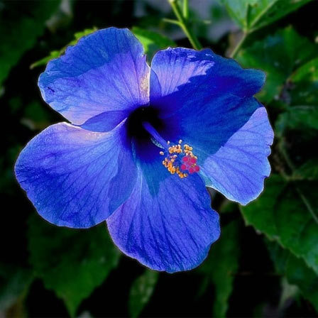 most beautiful blue flowers, Beautiful flower