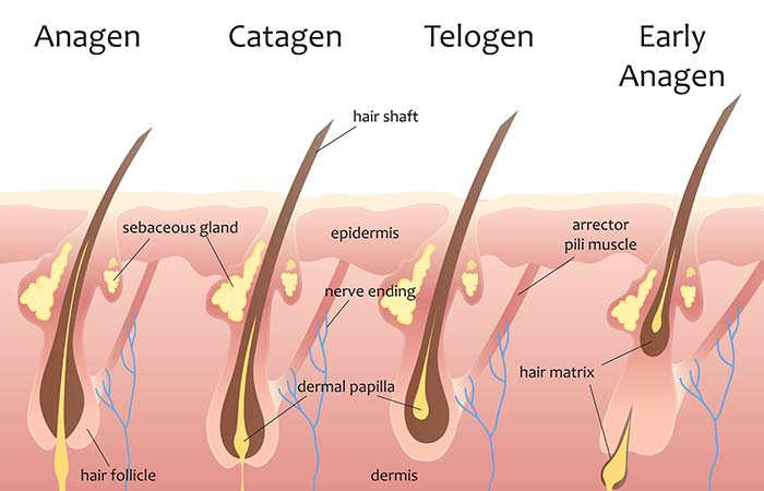 Protein For Hair Growth - Importance Of Protein For Hair Growth