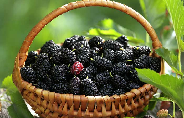 Mulberry Fruit Side Effects