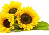 benefits of sunflowers