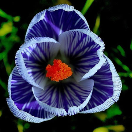 50 Most Beautiful Flowers In The World