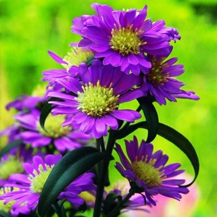 50 most beautiful flowers in the world daisies are believed to be around 4000 years old and egyptian ceramics decorated with daisies have also been excavated the specialty of this flower is that mightylinksfo Images