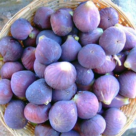 figs for health