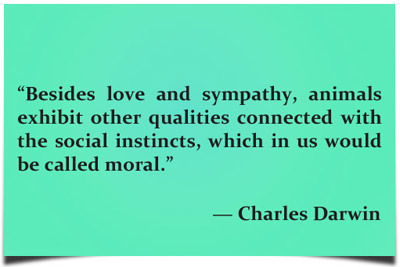 sympathy quotes 49