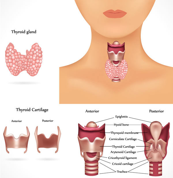 thyroid levels