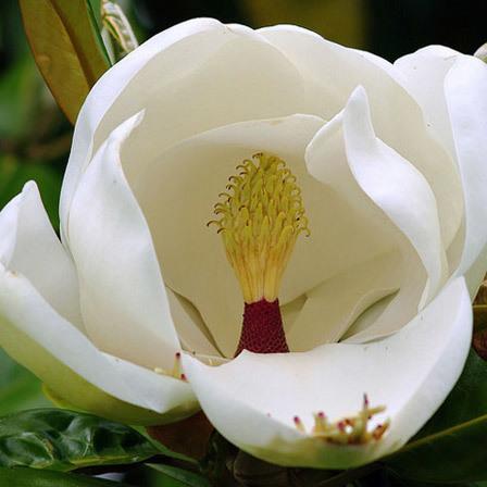 Top 25 most beautiful white flowers white daffodil flowers pinit mightylinksfo