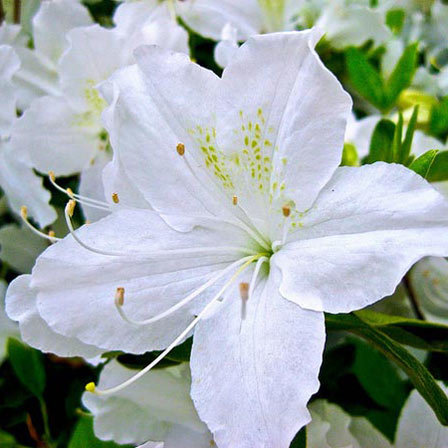 Top 25 Most Beautiful White Flowers