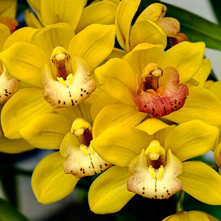 Top 25 most beautiful yellow flowers yellow orchids flowers pinit mightylinksfo