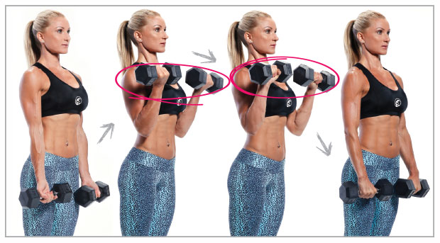 BICEPS: Hammer Curls work the lower bicep and upper forearm. 1 ...