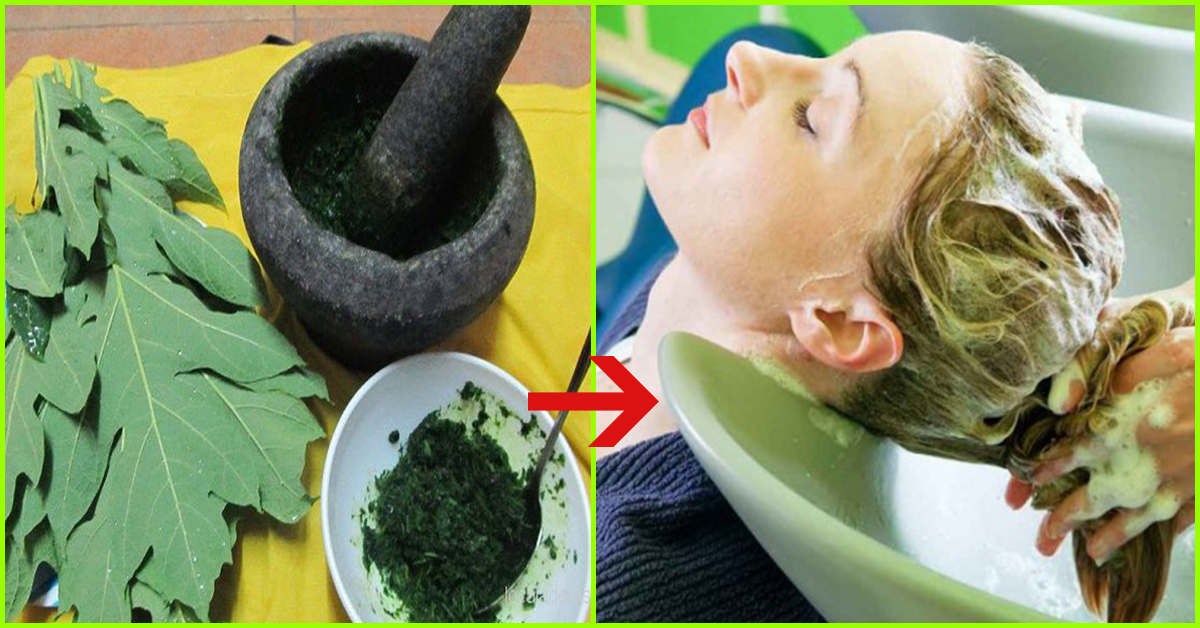 8 Fascinating Uses Of Papaya Leaf Juice For Glowing Skin And